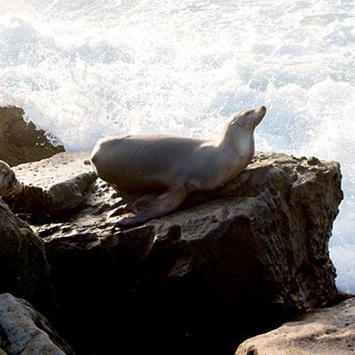 San Deigo Seal